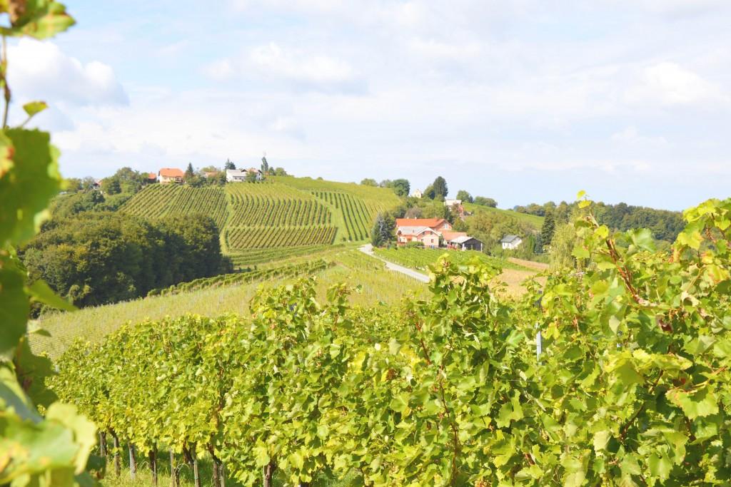 wijn-slovenie