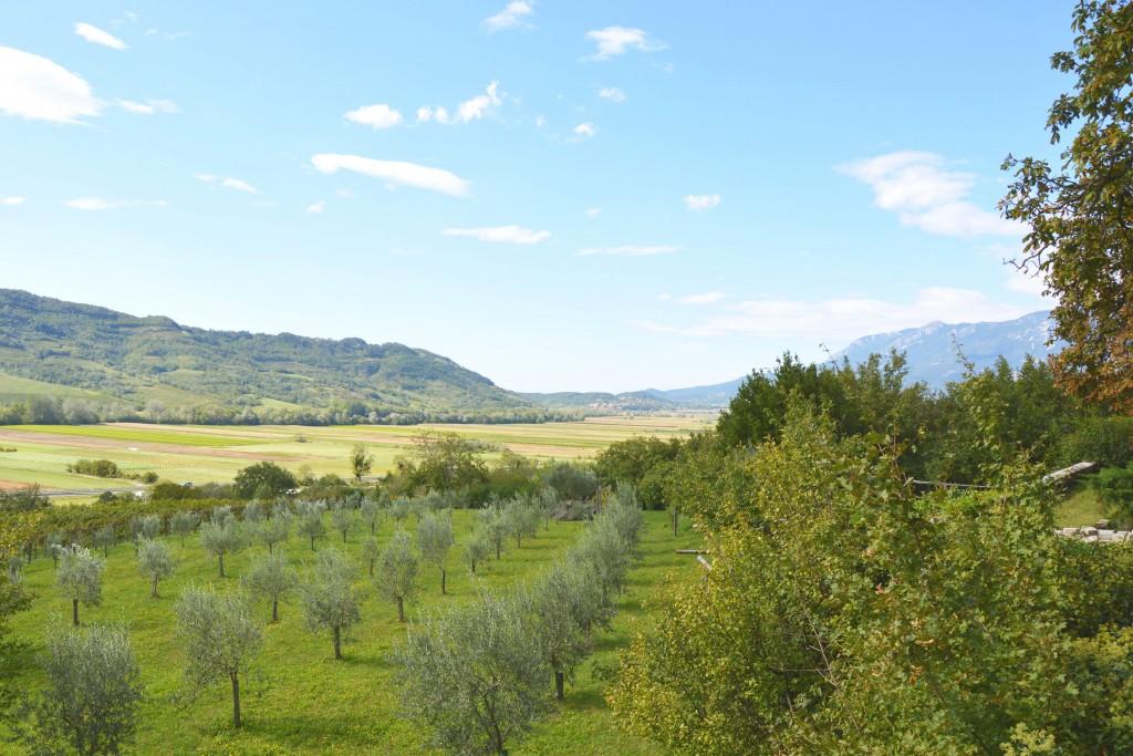 wijn-in-slovenie