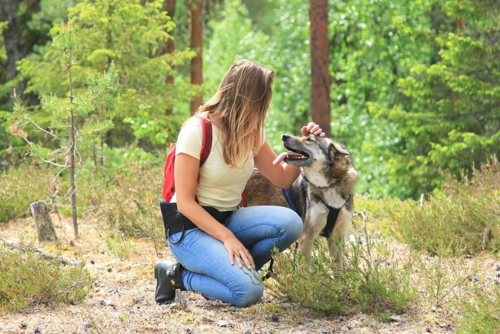 wandelen-huskys-zweden