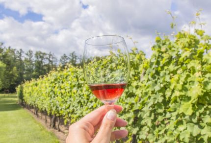 Op bezoek bij een wijnboer in de Achterhoek (Winterswijk)