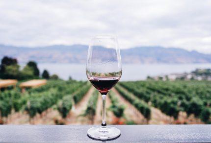 Wijnliefhebber? Zet deze wijnstreken in Europa op je bucketlist
